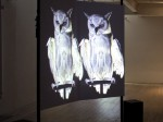 Oracles, Owls… Some Animals Never Sleep
