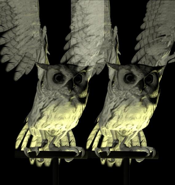 owl_516_X2_01_L_M